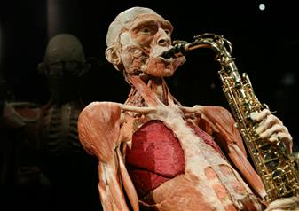 The Body Worlds Exhibition: The Happiness Project
