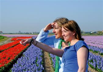 Escorted Half Day Tour to Flower fields, Keukenhof & visit to Bulbfarm