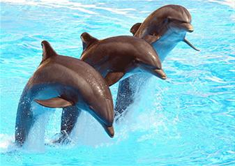 Dolphinarium Dubai: Dolphin and Seal show Entrance Tickets