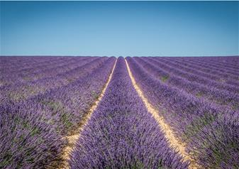 Lavender Tour in Valensole, Moustiers-Sainte-Marie, Verdon and Occitane from Marseille