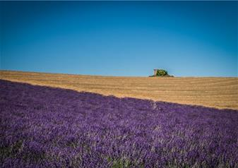 Tour of Lavender in Lourmarin, Roussillon and Sault