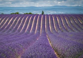 Full-day Lavender Tour in Valensole, Moustiers-Sainte-Marie, Verdon and Occitane