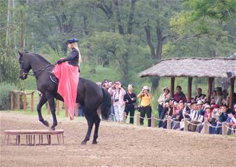 Magic Hungary Horse Show and Gödöllő Palace Tour