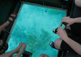 Key West Tour and Glass Bottom Boat Trip from Miami