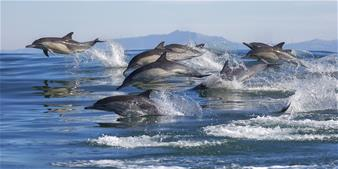 Dolphin Cruise in Muscat