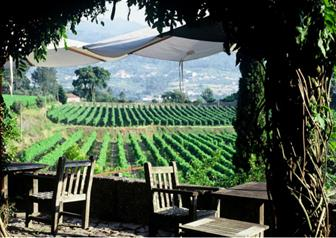 "Full Day Guided Tour to Vinho Verde ""Green Wine"" from Porto"