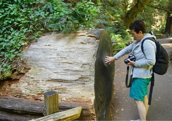 Super Saver San Francisco: Grand City Tour with Muir Woods Tour