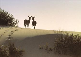 Doñana National Park, El Rocío & Matalascañas Beach Tour from Seville