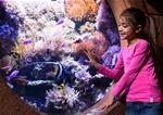 SEA LIFE London Aquarium Advance Ticket