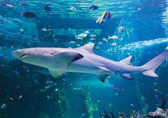 Combo Ticket  London Dungeon, SEA LIFE London Aquarium & Madame Tussauds