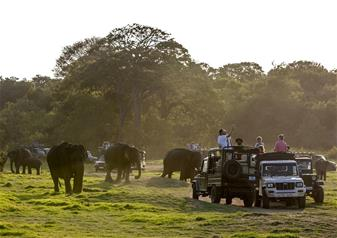 Half Day Minneriya Wildlife Safari Tour in Minneriya (Sri Lanka) with Hotel Transfers