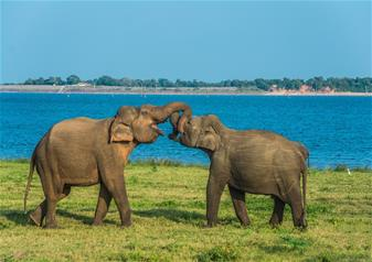 Half Day Udawalawe Wildlife Safari Tour in Sri Lanka with Hotel Transfers