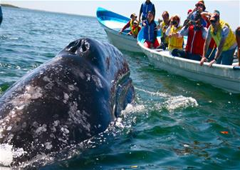 Half Day Whale Watching Activity at Mirissa in Sri Lanka with Hotel Transfers