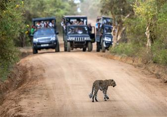 Half Day Yala National Park Tour from Tissamaharama in Sri Lanka with Hotel Transfers