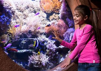 SEA LIFE London Aquarium Advance Ticket with Behind the Scenes Tour