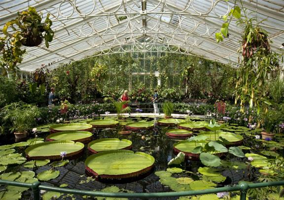 Richmond To Kew Gardens By Bus: Kew's Royal Botanic Gardens And Palace Tickets